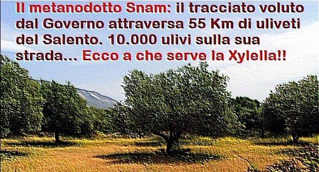 Per rinfrescarVi la memoria – Il metanodotto Snam: il tracciato voluto dal Governo attraversa 55 Km di uliveti del Salento. 10.000 ulivi sulla sua strada… Ecco a che serve la Xylella !!