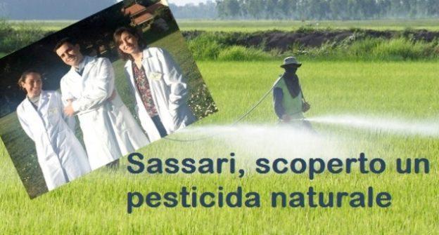Sassari, scoperto un pesticida del tutto naturale – le lobby insabbieranno anche questo?