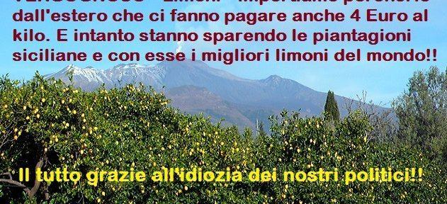 VERGOGNOSO – Limoni – Ci fanno pagare anche 4 Euro al kilo per porcherie che vengono dall'estero e in Sicilia si abbandonano le piantagioni. Stanno facendo scomparire i migliori limoni del mondo. E tutto per l'idiozia dei nostri politici!!