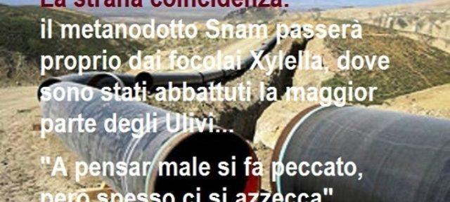 """La strana coincidenza: il metanodotto Snam passerà proprio dai focolai Xylella, dove sono stati abbattuti la maggior parte degli Ulivi …diceva un fesso """"a pensar male si fa peccato…"""""""