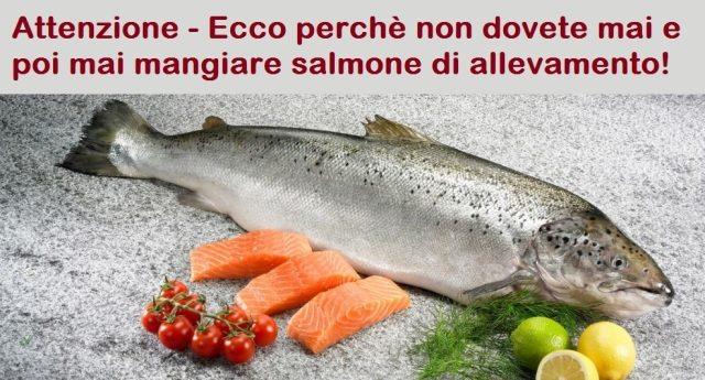 Attenzione – Ecco perchè non dovete mai e poi mai mangiare salmone di allevamento!