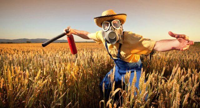 """Ed ora anche il Canada comincia ad ammettere: nel 30% del grano c'è glifosato… E se loro dicono solo """"30%"""", provate solo ad immaginare quali porcherie ci mandano…!"""