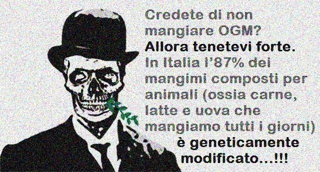 Credete di non mangiare OGM? Allora tenetevi forte. In Italia l'87% dei mangimi composti per animali (ossia carne, latte e uova che mangiamo tutti i giorni) è geneticamente modificato…!!!