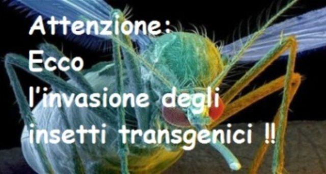 insetti transgenici