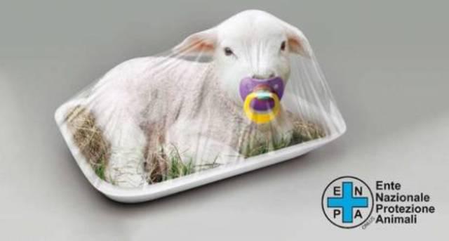 Enpa: «Firmate per fermare la mattanza degli agnelli per Pasqua»