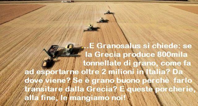 …E Granosalus si chiede: se la Grecia produce 800mila tonnellate di grano, come fa ad esportarne oltre 2 milioni in Italia? Da dove viene? Se è grano buono perchè  farlo transitare dalla Grecia? E queste porcherie, alla fine, le mangiamo noi!
