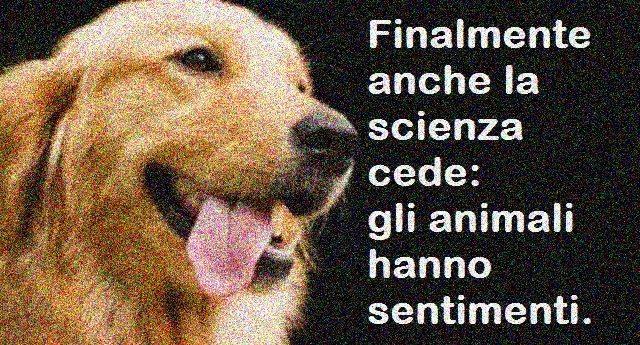 Finalmente anche la scienza cede: gli animali hanno sentimenti