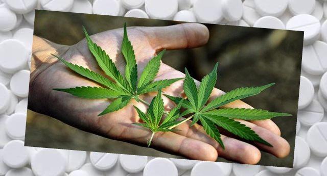 CANAPA – È tra le medicine più sicure. Pensate, l'aspirina già è letale a dosi 1000 volte inferiori !!