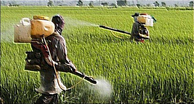 In India la Coca Cola e la Pepsi sono utilizzate come pesticidi …Siamo noi i fessi che ce la beviamo !!