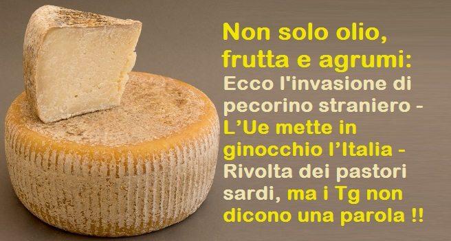 Non solo olio, frutta e agrumi: Ecco l'invasione di pecorino straniero – L'Ue mette in ginocchio l'Italia – Rivolta dei pastori sardi, ma i Tg non dicono una parola !!
