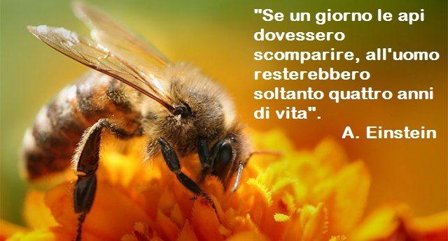 Salviamo le api prima che sia troppo tardi: in alcune parti del mondo sono già scomparse e la gente è costretta ad impollinare le piante da sè…