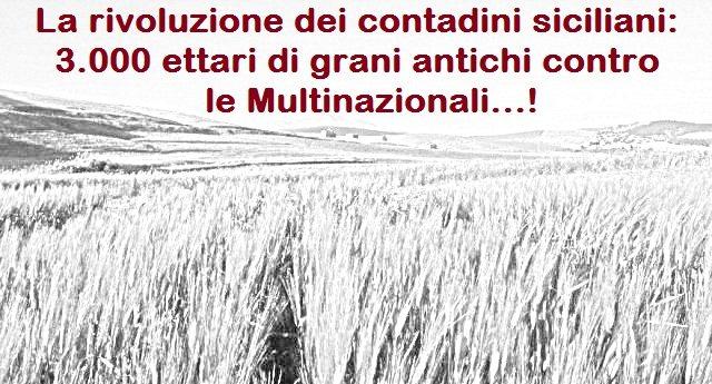 La rivoluzione dei contadini siciliani: 3.000 ettari di grani antichi contro le Multinazionali…!