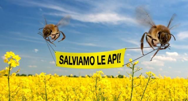 Milioni di api morte attorno ai campi di mais OGM imbevuti di pesticidi neonicotinoidi. L'Efsa li aveva vietati, ma evidentemente sotto la pressione delle Multinazionali, sta valutando di rivedere il divieto!