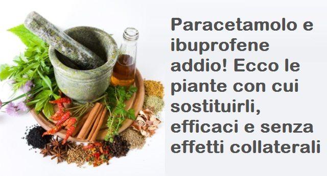 Paracetamolo e ibuprofene addio! Ecco le piante con cui sostituirli, efficaci e senza effetti collaterali