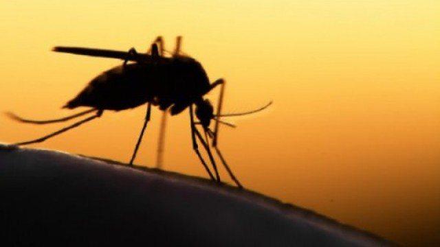 """L'ultimo allarme OMS: """"l'80% della popolazione mondiale è a rischio malattie da insetto, quali zanzare, mosche e zecche"""" e parliamo di un rischio di 700.000 vittime l'anno."""
