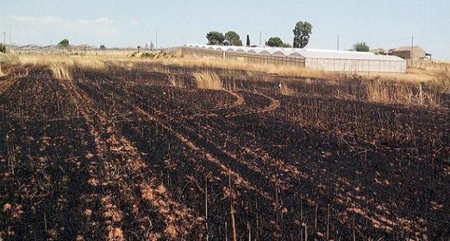 Incendio doloso distrugge un campo di due ettari: a chi danno fastidio i Grani Antichi Siciliani …?