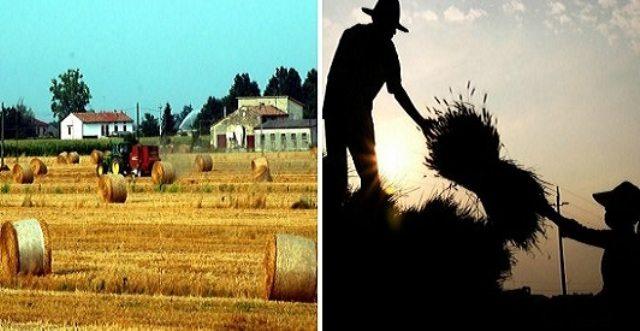 La guerra del Grano – C'è relazione tra pasta fatta con grano di importazione e intolleranze alimentari? …I produttori dicono di NO (ma guarda un po'), coltivatori e l'Università di Napoli dicono di SI!
