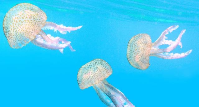 Sei stato punto da una medusa? Ecco cosa fare subito e cosa evitare