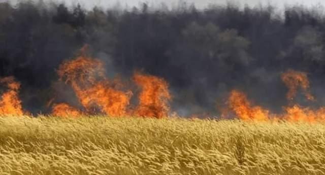 …E l'Ungheria si ribella a Monsanto: distrugge le sementi e da fuoco ai campi di mais OGM!!
