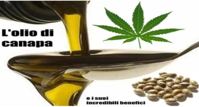 Le straordinarie proprietà dell'olio di semi di canapa: dai rari omega 3 ed omega 6, alle vitamine E, B1 e B2, fino al suo uso terapeutico… Tutto quello che c'è da sapere su questo rimedio miracoloso che ci hanno tenuto nascosto troppo a lungo.