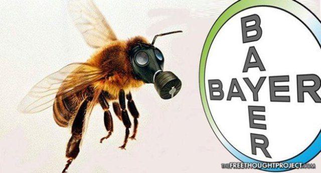 La strage delle api? Dobbiamo ringraziare la Bayer ed il suo pesticida killer!