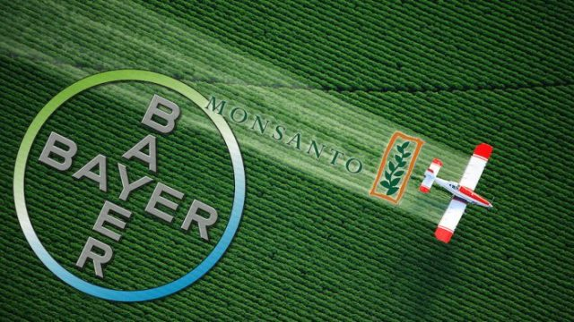 Glifosato: l'Ue si rimangia che il pesticida sia cancerogeno e rinnova per altri 10 anni, così come imposto dalla Germania… D'altra parte cosa ci dovevamo spettare dal matrimonio Bayer-Monsanto?