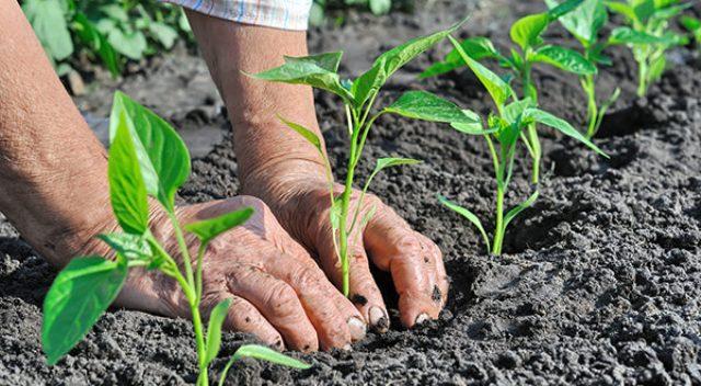 """Lo scandalo dell'agricoltura biologica siciliana: """"Uccisa nella culla"""""""