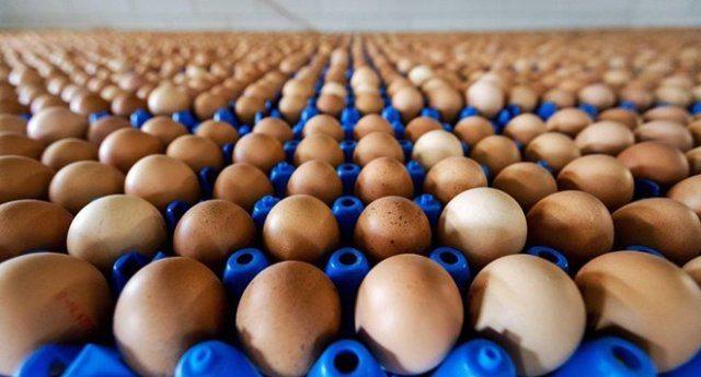 Milioni di uova contaminate in Europa. I prodotti chimici colpiscono ancora