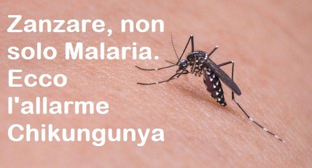 Zanzare, non solo Malaria. Ecco l'allarme Chikungunya