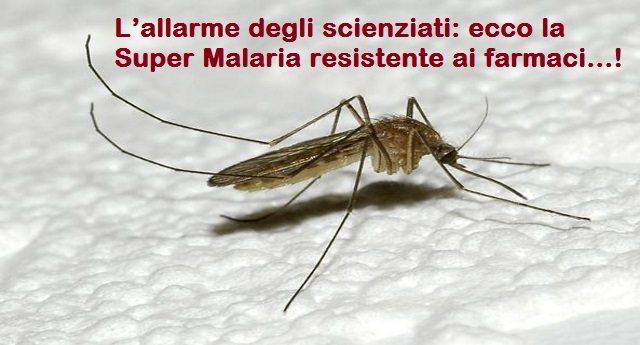 L'allarme degli scienziati: ecco la Super Malaria resistente ai farmaci…!