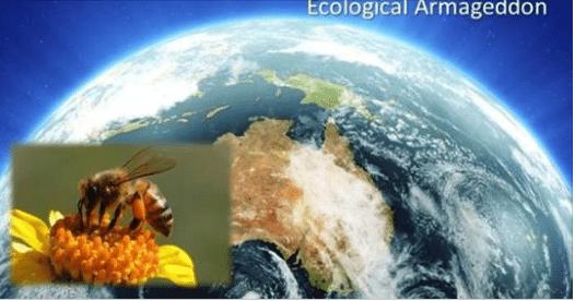 Scienza – La vita sulla Terra sta collassando. Studiosi tedeschi rilevano una riduzione del 75% della biomassa di insetti volanti!