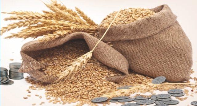 Micotossine? Don? Pesticidi? Glifosato? Monsanto? Ma chi se ne frega: grano duro, a settembre raddoppiano le importazioni! …E ciaone al buon grano Italiano!