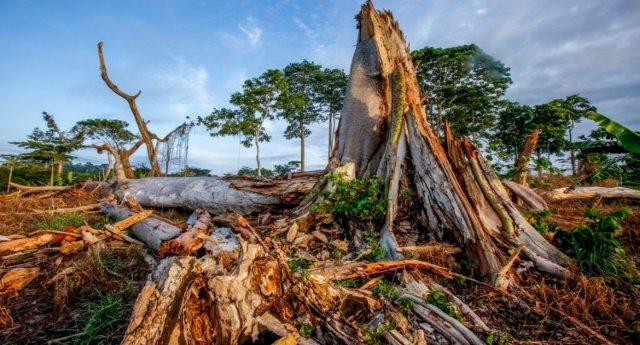 Come la produzione di cacao sta distruggendo le foreste africane, senza neppure portare ricchezza