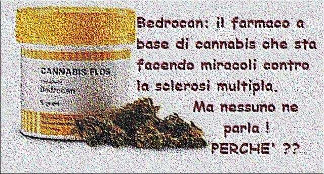 Bedrocan: il farmaco a base di cannabis che sta facendo miracoli contro la sclerosi multipla, ma nessuno ne parla!