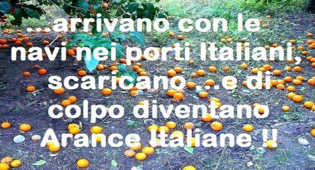 Rosarno, la mattanza delle arance – Come fanno morire le nostre Arance (le migliori del mondo) e ci costringono a consumare porcherie che non si sa nemmeno da dove arrivano!!