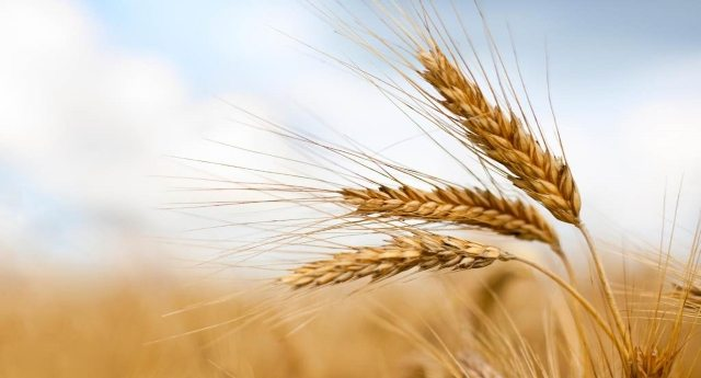 Coldiretti lancia l'allarme: solo 25 analisi su 7,6 miliardi di kg di grano che arriva dall'estero. E grazie che poi mangiamo porcherie!