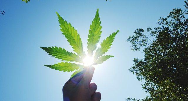 Perché la cannabis fa tanto paura? Un semplice esempio: la cannabis terapeutica farebbe perdere a Big Pharma, solo negli Stati Uniti, più di 4 miliardi di dollari l'anno!