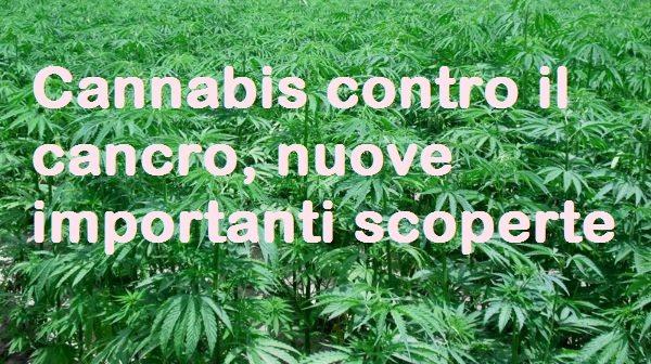 Cannabis contro il cancro, nuove importanti scoperte