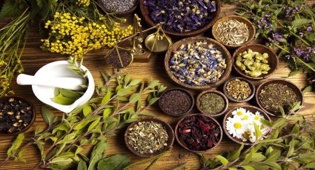Le piante proibite – Quelle piante che fanno bene alla nostra salute ma che non fanno arricchire le Multinazionali!