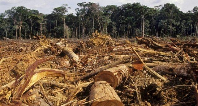 Altro che palma sostenibile! Le promesse tradite di Nestlè e Mars