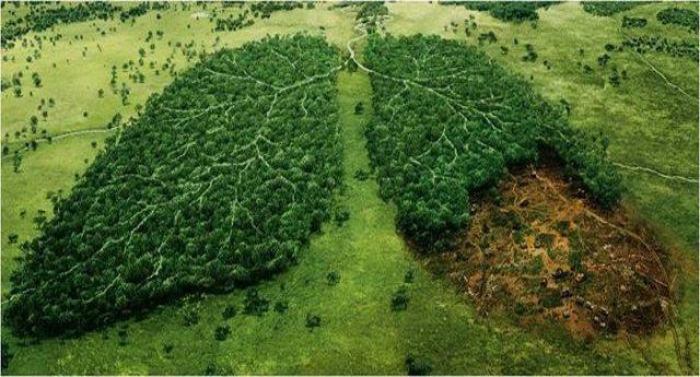 Il pianeta soffoca a causa della deforestazione. Chi sono i principali responsabili? Sempre loro, le Multinazionali! Ecco quali…