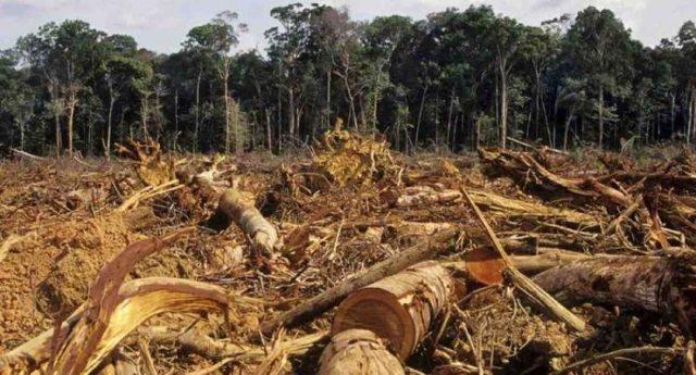 Amazzonia ostaggio delle Multinazionali, ripresa a pieno ritmo la deforestazione!