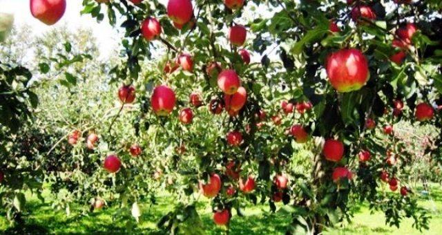 Le mele del Trentino? Sono così piene di pesticidi da aver contaminato il DNA dei neonati !!