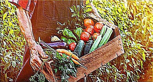 …E dall'Unione Europea ancora un colpo basso contro la nostra agricoltura biologica!