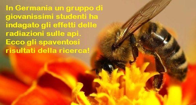 …Se gli smartphone uccidono le api!