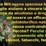 Mitragyna Speciosa
