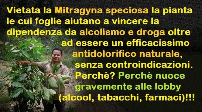 La triste storia della Mitragyna Speciosa, la pianta vietata perchè nuoce gravemente alle lobby!!