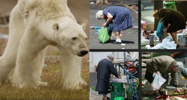 Sì, le strazianti immagini dell'orso che muore di fame fanno riflettere. Ma non dimentichiamo il pensionato di Bergamo o il precario di Foggia che, grazie a chi ci governa, non se la passa molto meglio… L'allarme del Codacons: VERGOGNA, Un Italiano su tre a rischio povertà o esclusione!