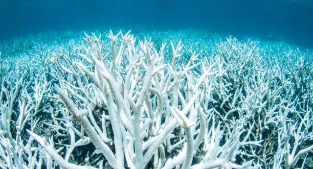 Attenzione – Acidificazione degli oceani: un'allarmante conseguenza del riscaldamento globale.