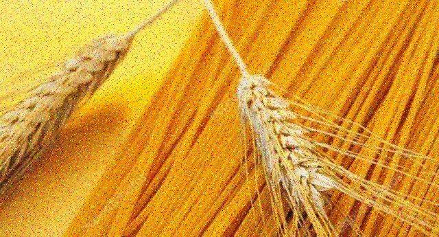 """Dalle analisi di GranoSalus, ecco otto marche di spaghetti """"Bio"""" che non contengono glifosato"""